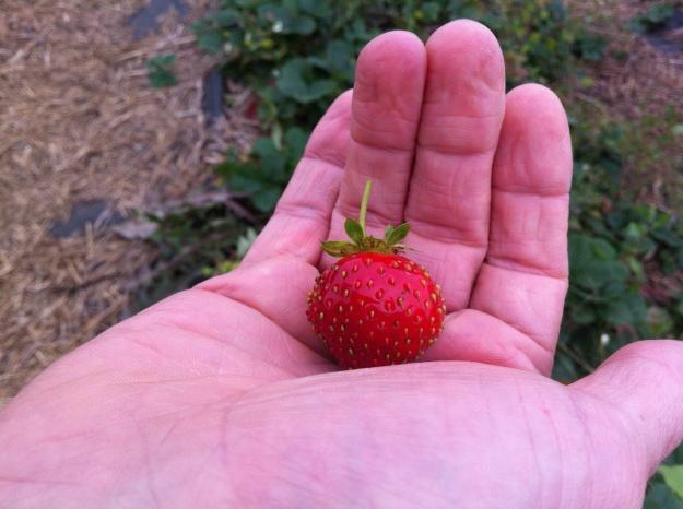 Still a few tasty berries to be had.