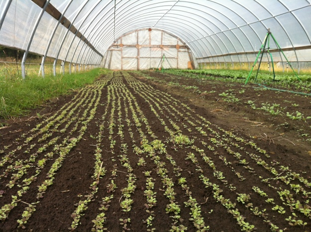 The high tunnels at Big River Farms.